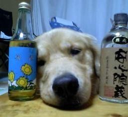 ヨッパライ犬.jpg